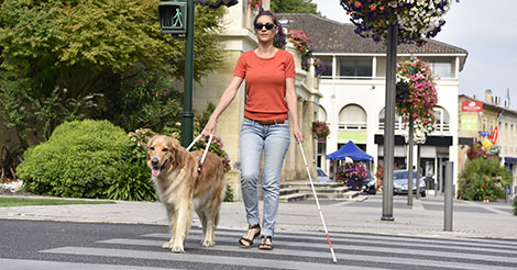 woman with a seeing eye dog in the crosswalk
